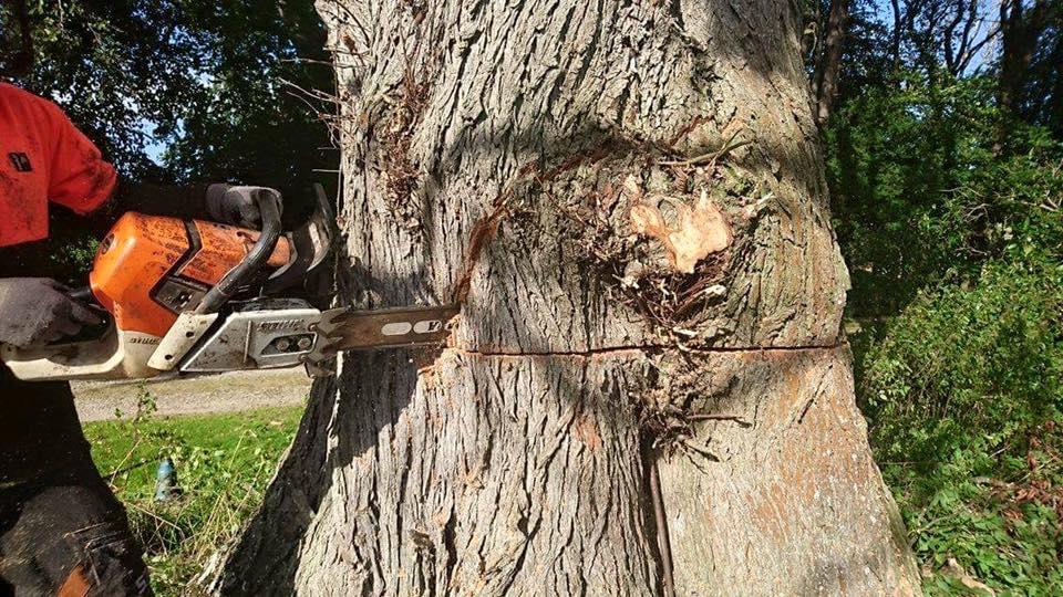 cost-tree-felling