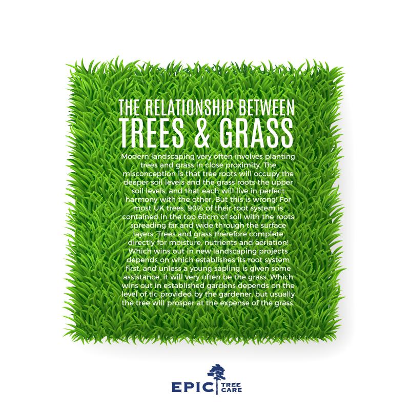 trees-grass