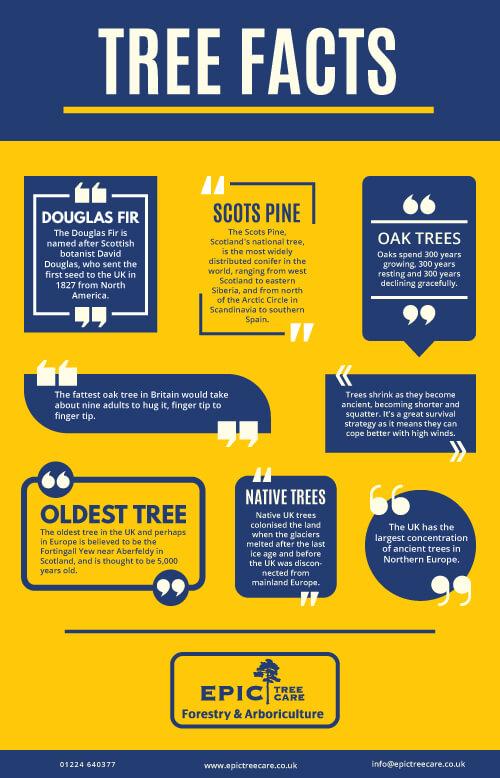 tree-facts